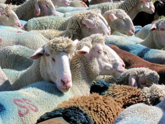 ete-pastoralisme